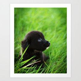Shelter Puppy Art Print