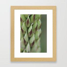 Lupine (1) Framed Art Print