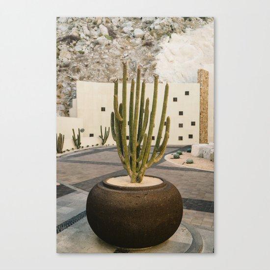 Cabo Cactus VIII Canvas Print