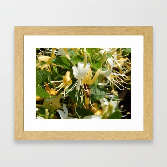 Honeysuckle Bee Framed Art Print