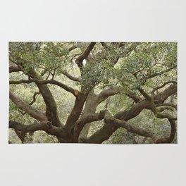 Live Oak Rug