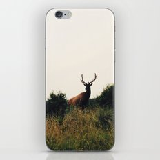 Prairie Creek Elk iPhone & iPod Skin
