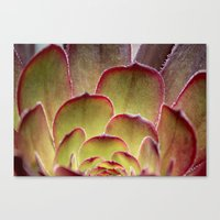succulent Canvas Prints featuring Succulent by Shy Photog