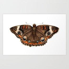 Common Buckeye (Junonia coenia) Art Print