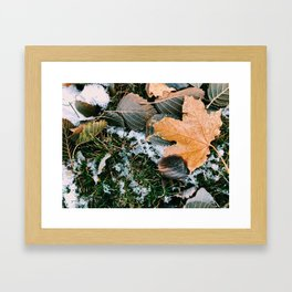Autumn leaves in winter Framed Art Print