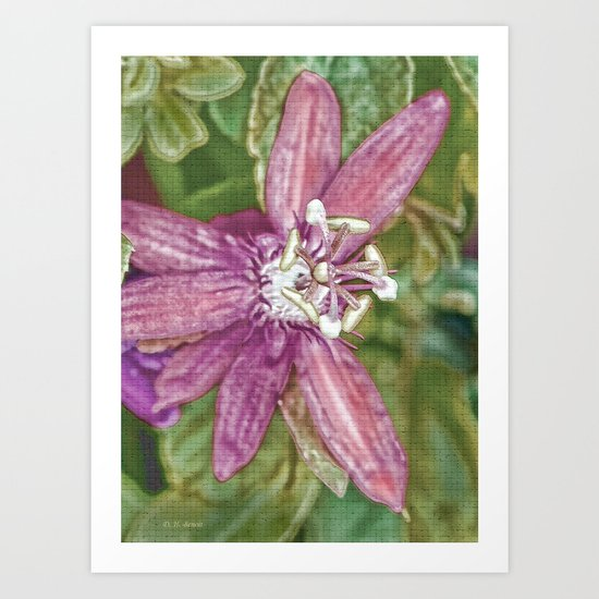 Passion Flower Art Art Print