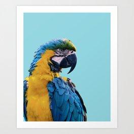 Macaw photograph | Macaw digital art print Art Print