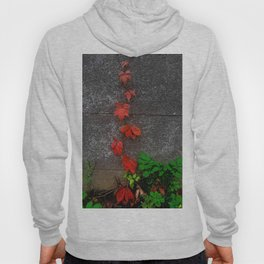 Red and green leaves on the wall Hoody