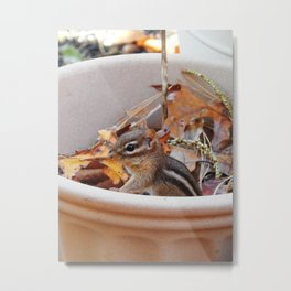 The safety of the flower pot Metal Print