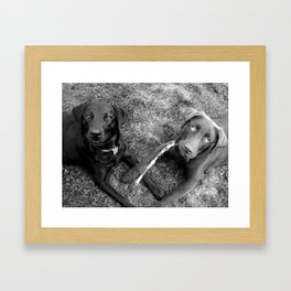 Double Dog Dare Framed Art Print