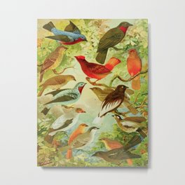Amazonian Birds by Göldi & Emil August Belem Brazil Colorful Tropical Birds Scientific Illustration Metal Print