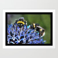 bees Art Prints featuring Bees by Doug McRae