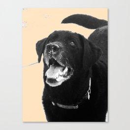 Labrador Happy Canvas Print