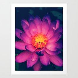 London Purple Lotus Art Print