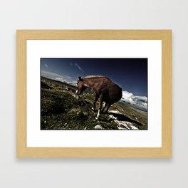 DARTMOOR PONY Framed Art Print
