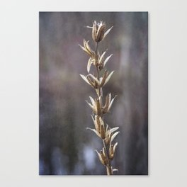 Still life- dried winter plant Canvas Print