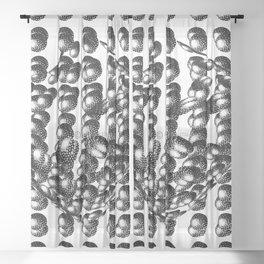 Atoms Sheer Curtain