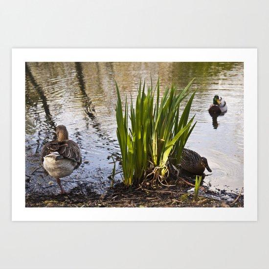 The One Legged Duck Art Print