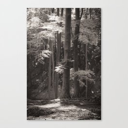 Sherwood Forest #1 Canvas Print