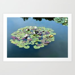 lily pads at the Brooklyn Botanical Gardens Art Print