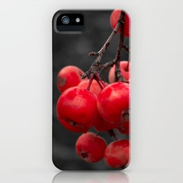 Apples in autumn on a tree branch iPhone Case