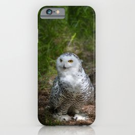 Alaskan Snowy Owl - Summer iPhone Case