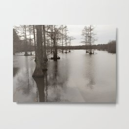 Cypress of the swamp Metal Print