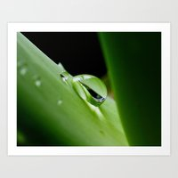 Dew Drop on Aloe Art Print