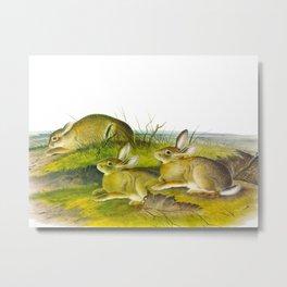 Wormwood Hare Metal Print