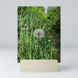 Make A Wish Mini Art Print