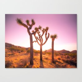 Three Sisters at Sunset- Joshua Tree Edition Canvas Print