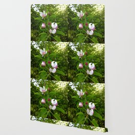 Apple Blossoms In Spring Time Wallpaper