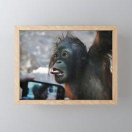 Baby Orangutan Framed Mini Art Print