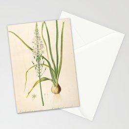 ornithogalum pyramidale Redoute Roses 3 Stationery Cards