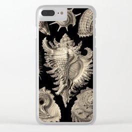 Ernst Haeckel Prosobranchia Sea Shells Clear iPhone Case