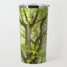 Beech Tree Travel Mug