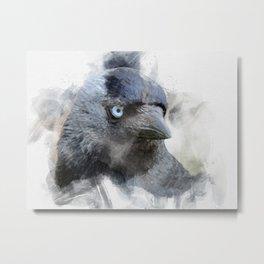 jackdaw - blue eyes Metal Print