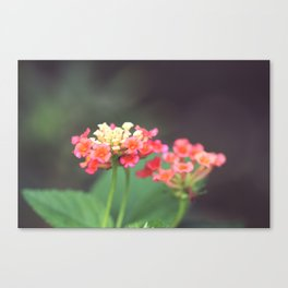 Tiny Lovelies Canvas Print
