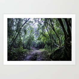 Misty Trail in the Rainforest of the Chocoyero-El Brujo Nature Reserve in Nicaragua Art Print