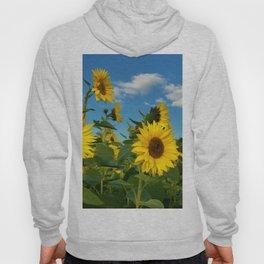 Sunflowers 11 Hoody