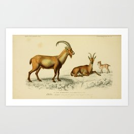 Vintage Print - Universal Dictionary of Natural History (1849) - Wild Goat Art Print