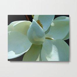Blue Magnolia II Metal Print
