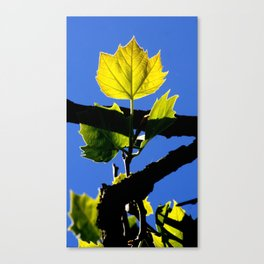 Spring Leaf. Canvas Print