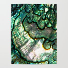 Shimmering Green Abalone Mother of Pearl Poster