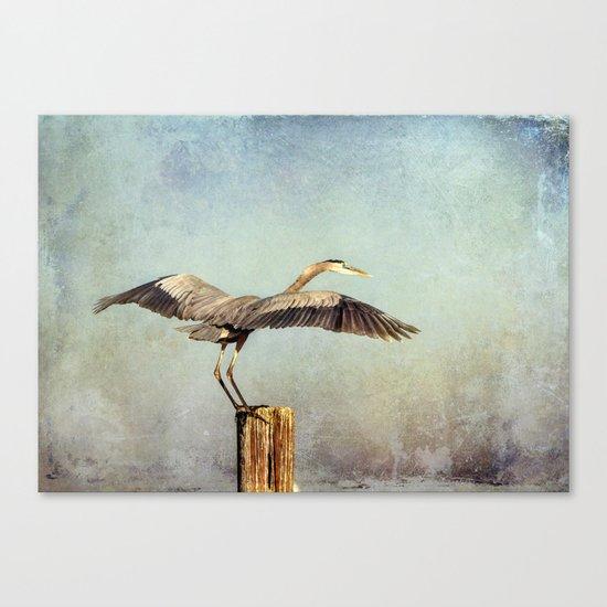Blue Heron Landing Canvas Print