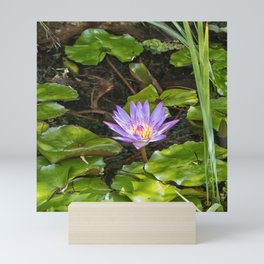 Exquisite water lily Mini Art Print