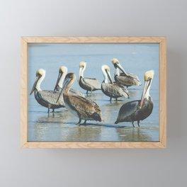 Pelicans Framed Mini Art Print