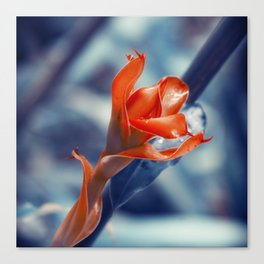 Ginger Flower Canvas Print