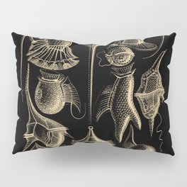 """Peridinea"" from ""Art Forms of Nature"" by Ernst Haeckel Pillow Sham"
