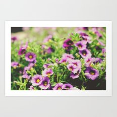 Full House of Purple Flowers Art Print